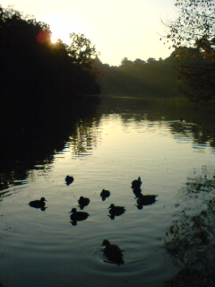晩秋の朝…