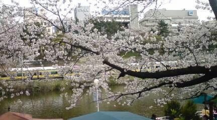 神楽坂&飯田橋の桜