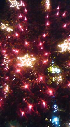 クリスマスの色☆