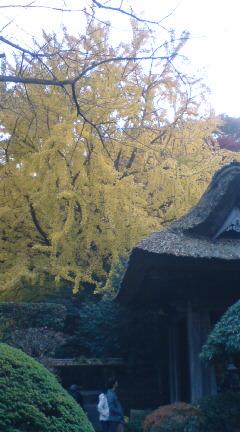 古都鎌倉にて紅葉散策♪