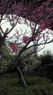 水戸偕楽園